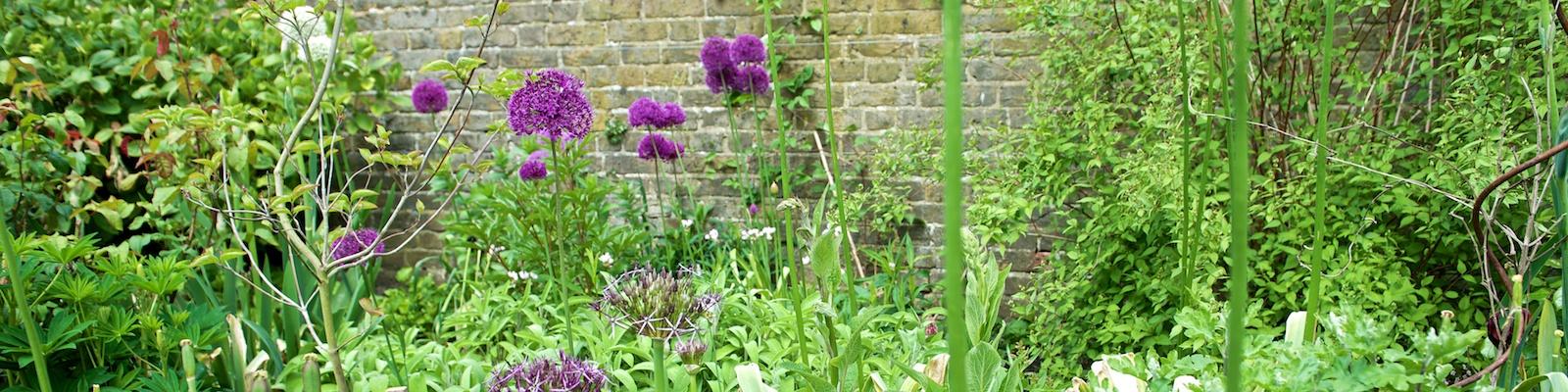 Posy Gentles Gardening Blog