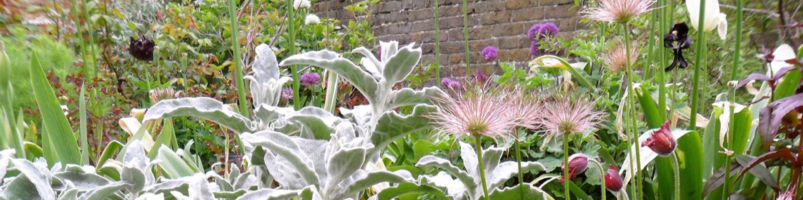 Posy Gentles Gardener